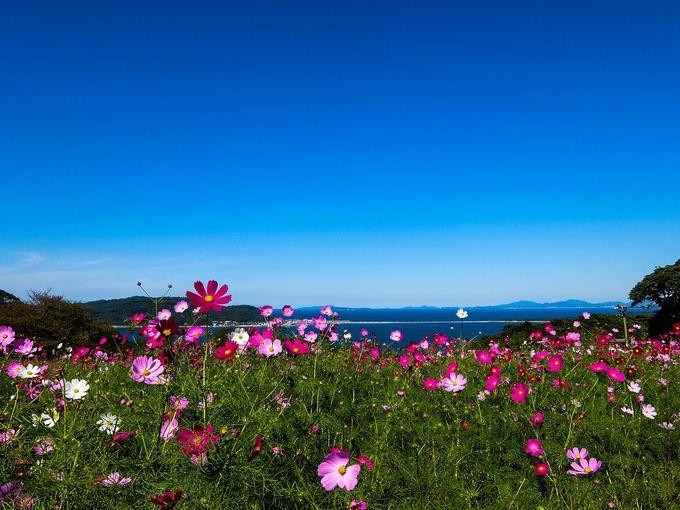 23.「能古島」四季折々の花
