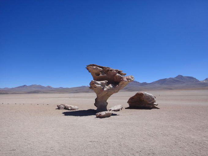 砂漠にそびえ立つ「砂漠の木」。