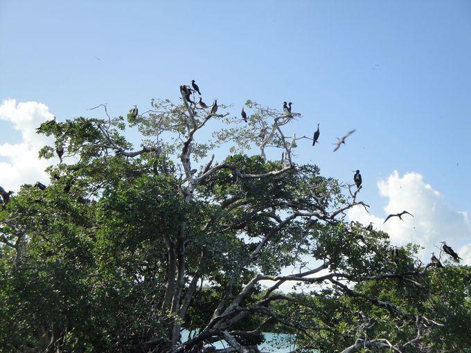 鳥の区域も存在します!野鳥好きにはたまらないバードウォッチングポイント!