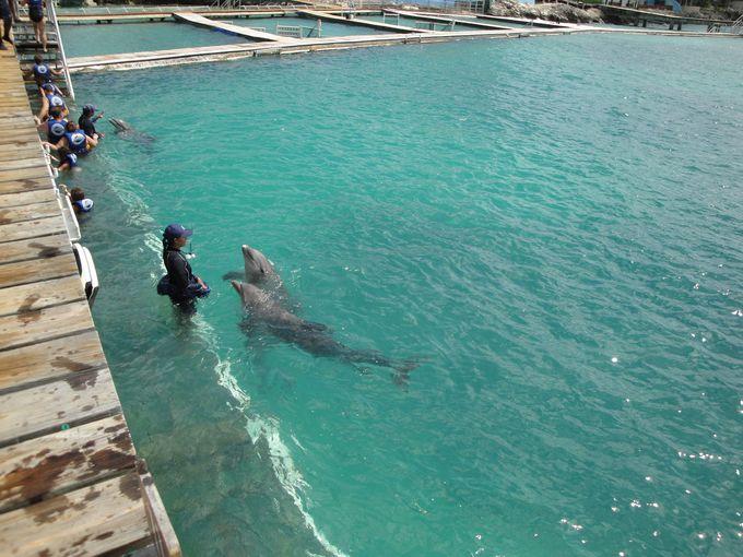 イルカと遊べる!ドルフィン・ディスカバリー