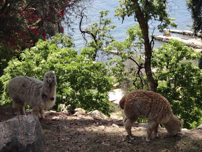 太陽の島に生息する可愛い動物たち
