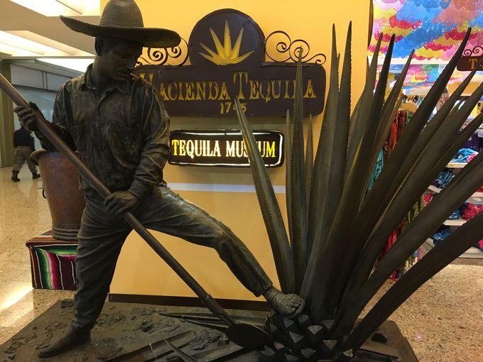 テキーラ大国メキシコで学ぶ、テキーラの歴史