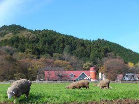 なぜかシマウマもいる!神奈川「服部牧場」で動物たちとふれあおう