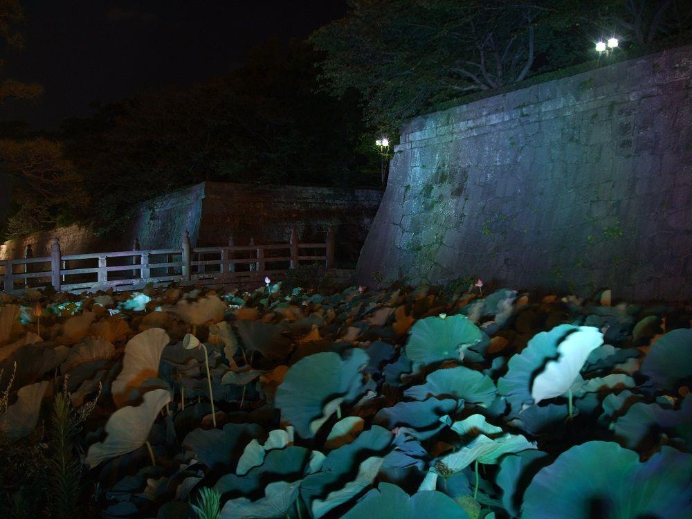 大手門復元間近!鶴丸城跡の幽玄なるライトアップ