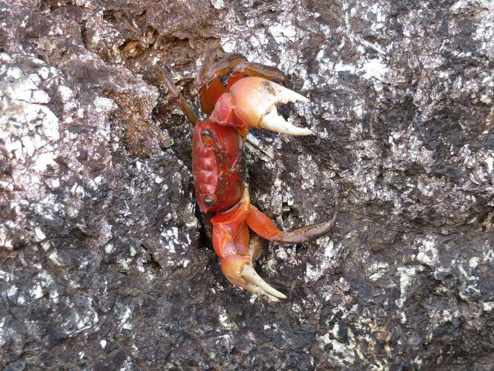 海岸や磯に生きる生物や植物!室戸岬の多様な生態系