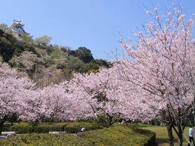 桜香る絶景の城山!千葉「館山城」の史跡巡りと里見だんごを堪能