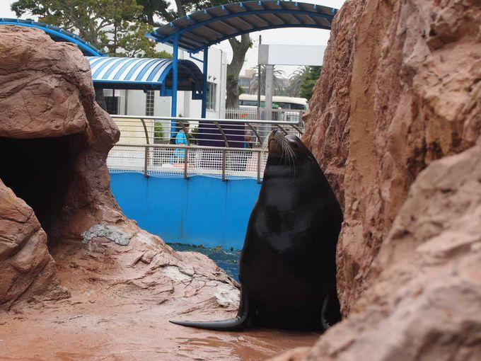 ペンギンやアシカを間近で見られる「島」