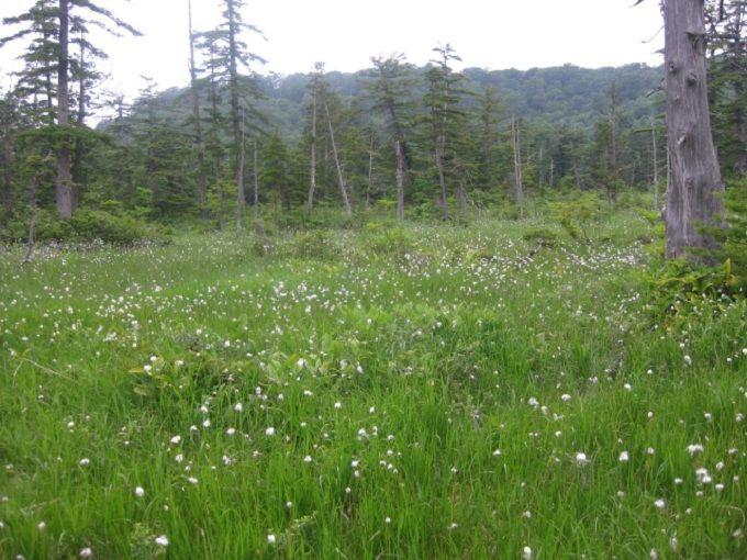 ぐるっと1周30分!!初夏の草花で彩られたデコ平湿原