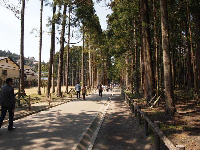 国宝瑞巌寺のシンボル、復興を目指す参道の杉並木を歩く