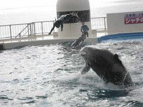 圧巻!!シャチのショー!笑うアシカにも会える千葉県最大の海のテーマパーク「鴨川シーワールド」