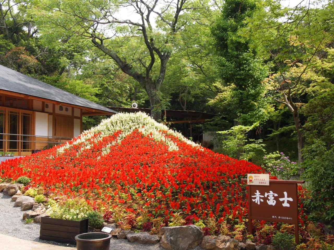 燃えるような赤が映える小さな「赤富士」