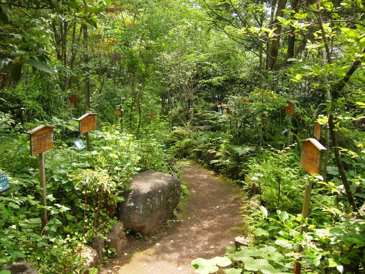古代の歌人の句に思いをはせる「万葉の森」