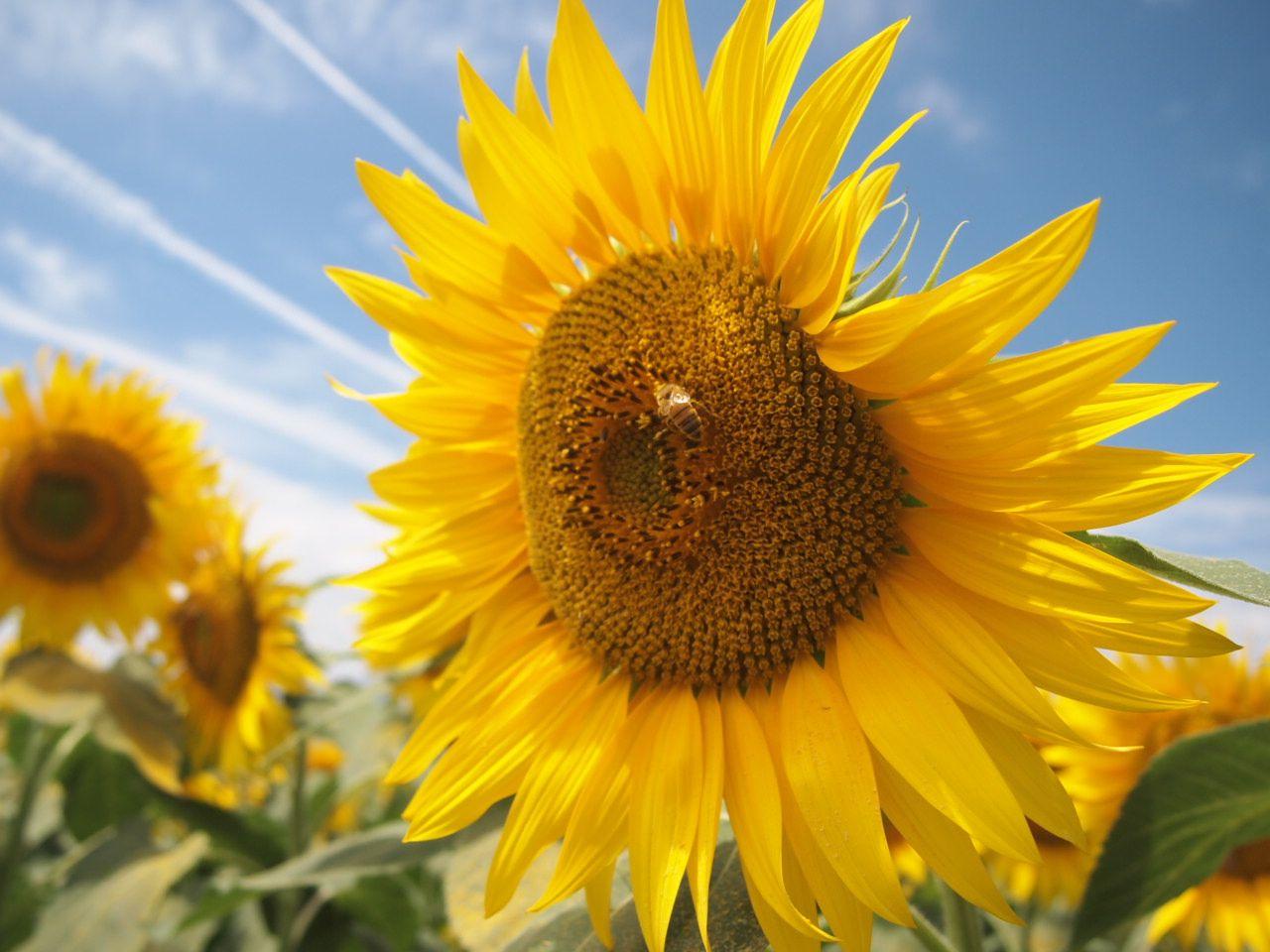 ミツバチが集める甘い蜂蜜!