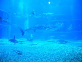 ジンベイザメに癒される!8階建ての超大型水族館「海遊館」へ行こう!!