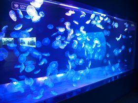 幻想的な世界にくぎ付け!!東京ソラマチ「すみだ水族館」で大人デートを楽しもう♪
