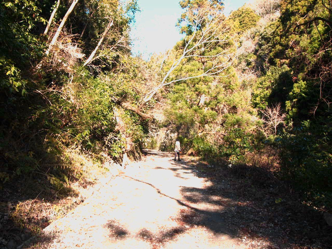 歩き始めは幅の広い林道から。