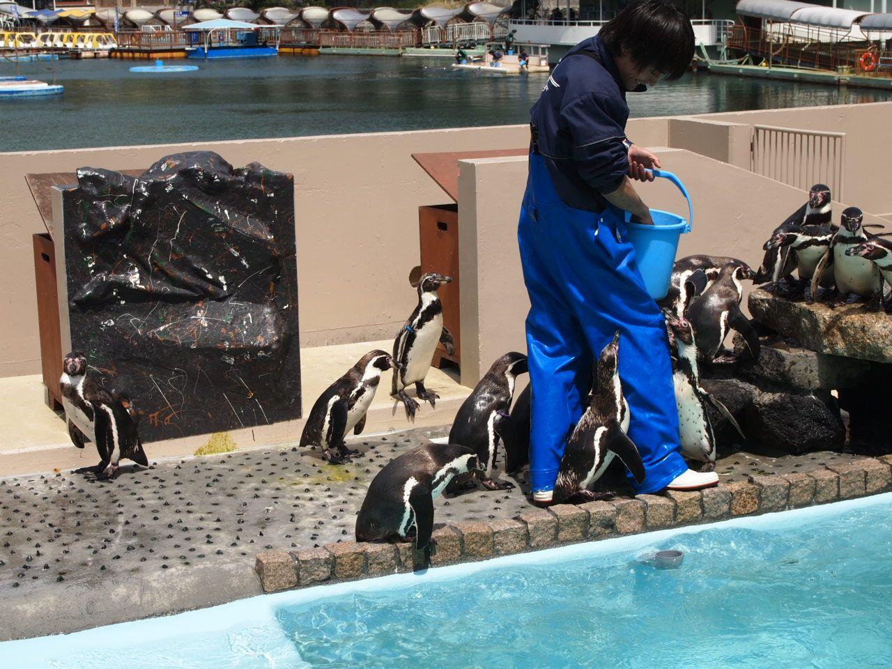 飼育32年達成!!最高齢のペンギン「じいや」を探せ〜