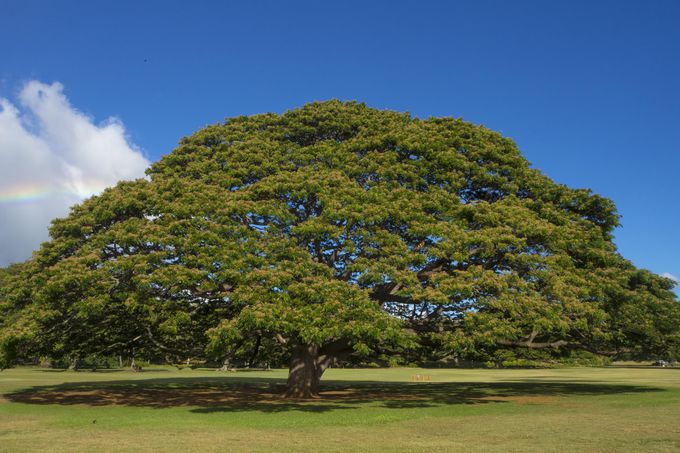 この木なんの木気になる木でおなじみの公園