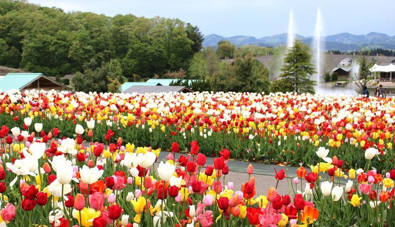 新潟・長岡市を訪れるのなら!周辺を含めたおすすめ観光スポット6選