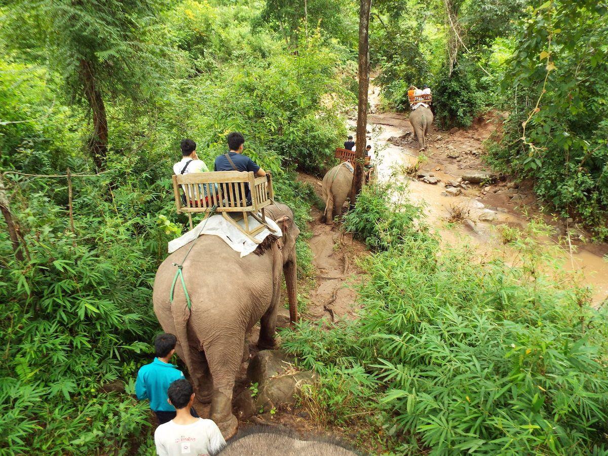 まずはイス付きの象に乗って森の中を散策!