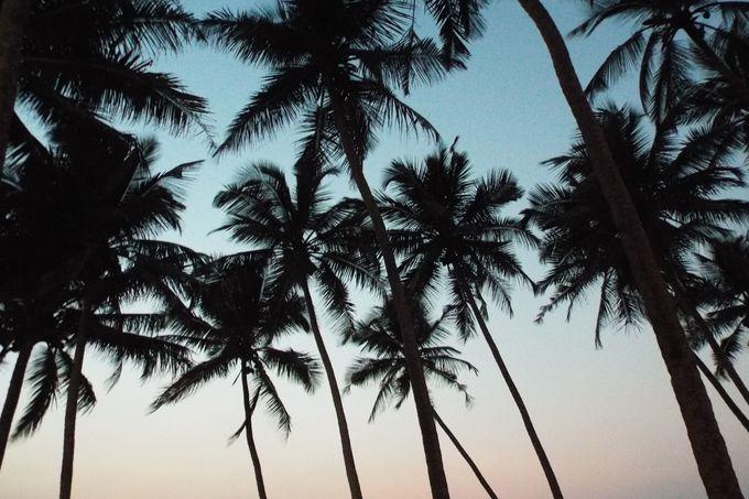 インド最大のビーチリゾート・ゴアとは?
