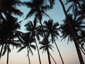 ヒッピーだけじゃない!インドのビーチリゾート・ゴアの多様さがすごい