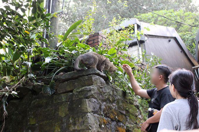世界的に有名な猫村「猴硐(ホウトン)」とは?