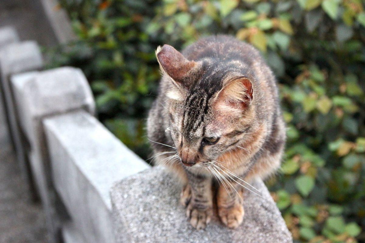 世界6大猫スポットのひとつ!台湾・猴硐の「猫村」