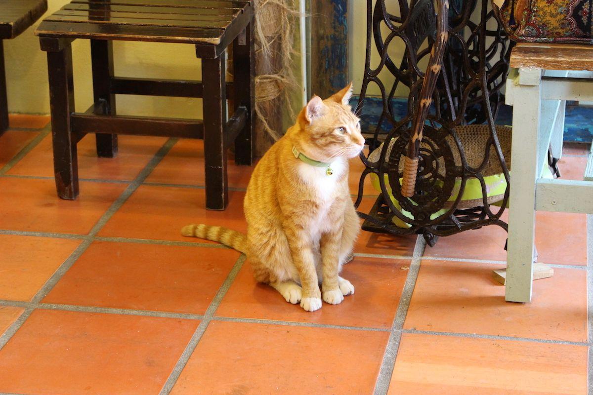 景色が良くて寛げる猫カフェもある