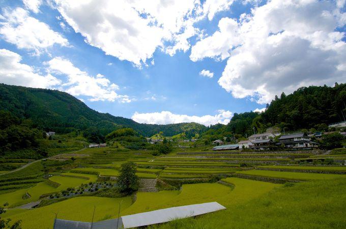井仁の棚田の青空と稲の緑色の光景が美しい