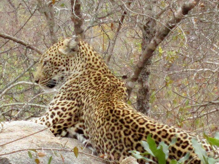 野生動物の宝庫「サビ・サンド私営動物保護区」