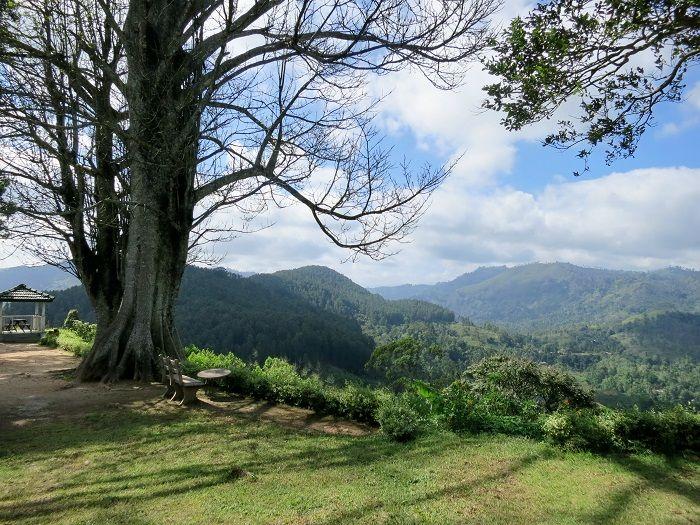 裏庭から見渡す美しい山々の景色