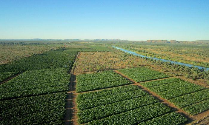 灌漑農園が広がるキンバリー地方のオアシス「カナナラ」