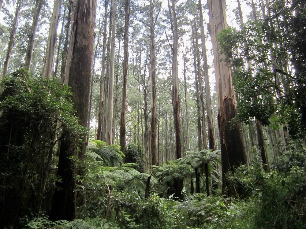 シャーブルックの森で森林浴