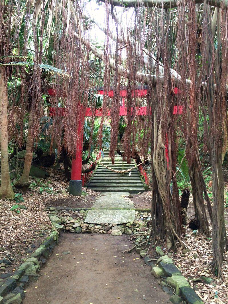 満ち溢れる自然の生命力を体感。「御崎神社」への道