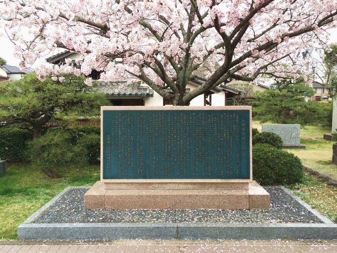 生涯が綴られた碑文と桜の木