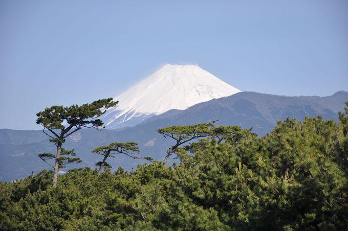 """「千本松原」に加えて、愛鷹山、世界遺産""""富士山""""が織り成す絶景"""