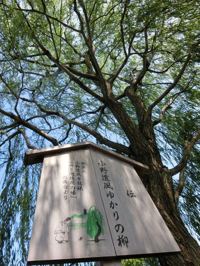 「三蹟」のひとり・小野道風ゆかりの柳