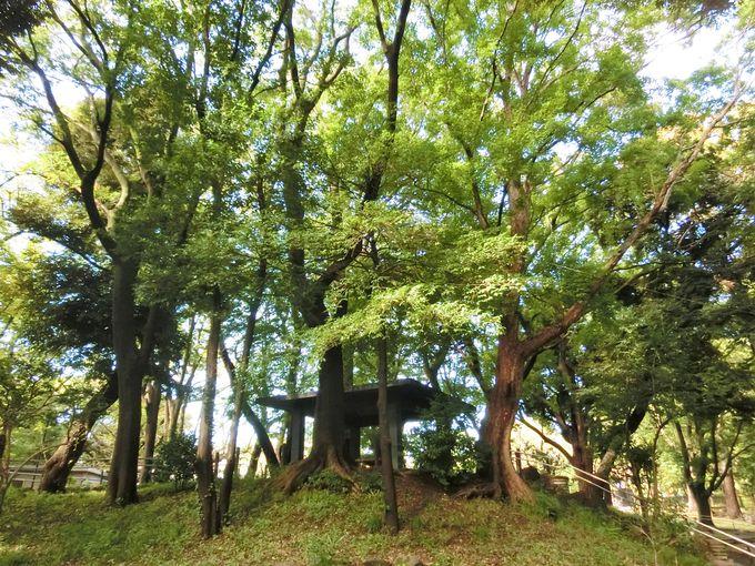 旧渋沢庭園内には、茶席跡や稲荷社跡も