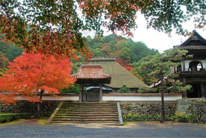 庭園や総茅葺きの本堂!森鴎外の墓もある島根・津和野「永明寺」