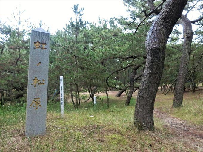 「虹の松原」の歴史とアクセス