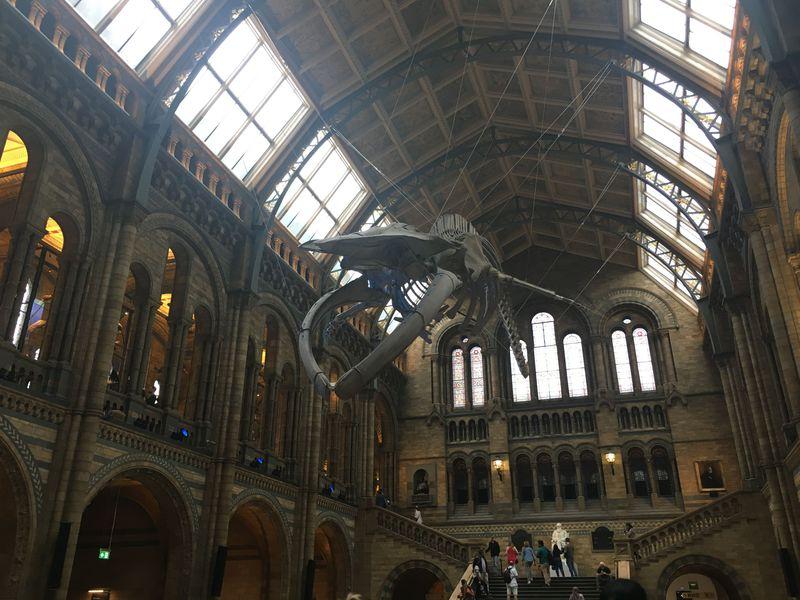 自然史博物館は建物も展示品も超一級品!