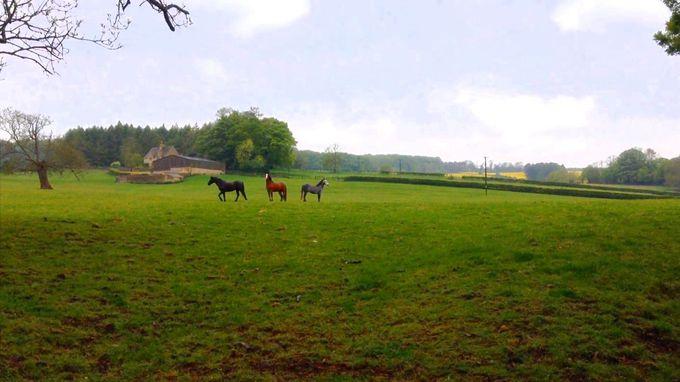 馬がふつうにみられる村