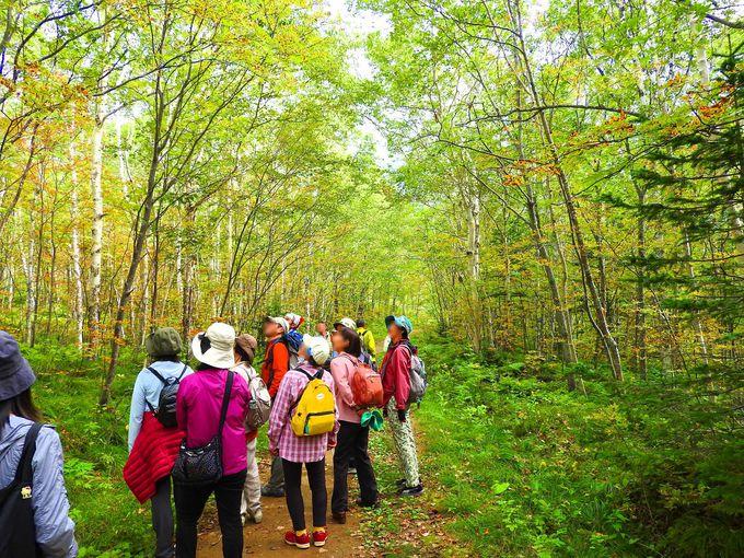 木漏れ日の中の森林コースをゆっくり歩く