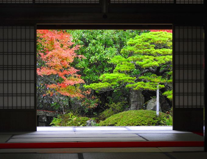 庭の眺め、玄関からの眺めに一服の楽しみ