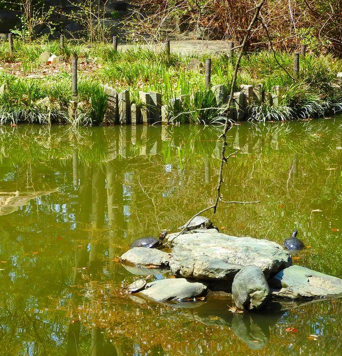 亀の頭の上に上知我麻神社、亀の尾の上に何がある???