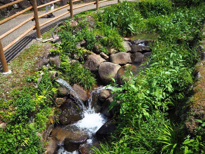 鞍掛山からの湧き水が棚田に満々と水を満たします