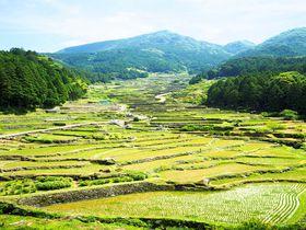 三河のおすすめ観光地10選 豊かな自然に癒される旅を!