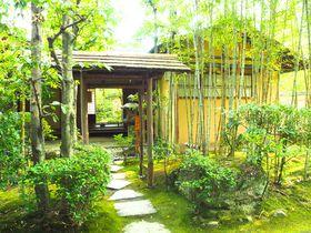 愛知犬山有楽苑で国宝茶室如庵、静寂の庭園、抹茶を楽しむ旅