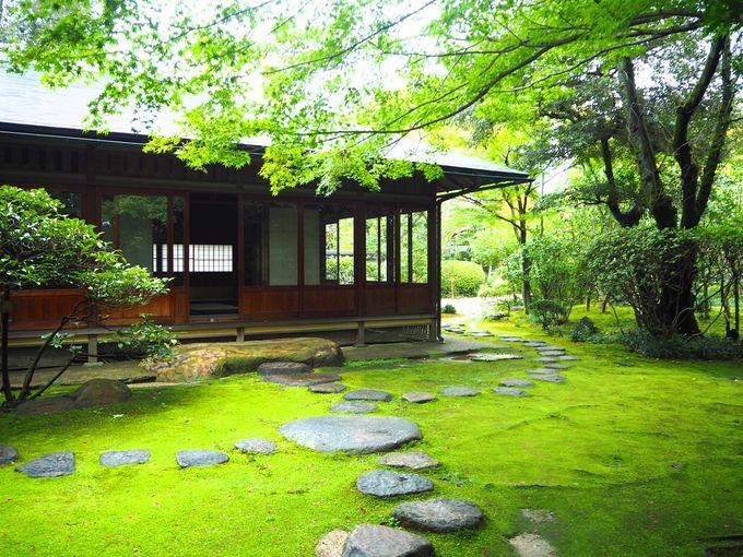 新しく作られた茶室「弘庵」、紅葉の見頃は11月中旬